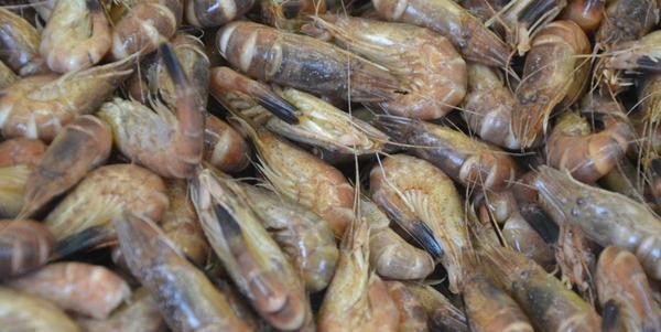 Frisch gepult am besten: Krabben