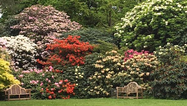 Blütenpracht in allen Farben