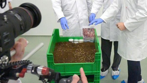 Insekten als Tierfutter: Alternativlösung