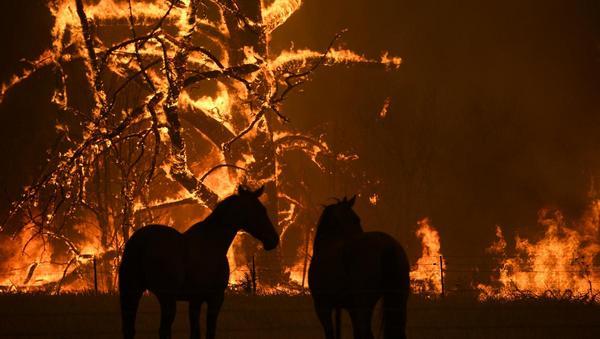 Waldbrände in Australien: Alles wegen der Kohle