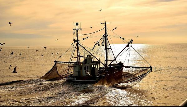 Krabbenfischer in Sorge