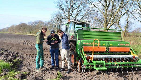 Volsemenhusener Landwirt baut Kümmel für Heider Spirituosenfabrik an