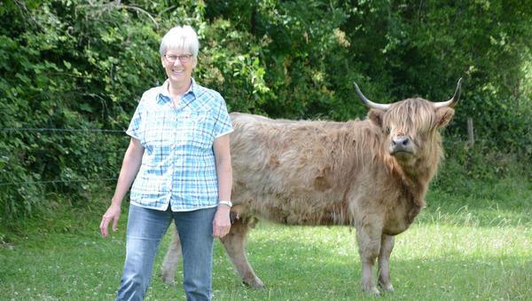 Highland-Rinderkuh wird zum Filmstar
