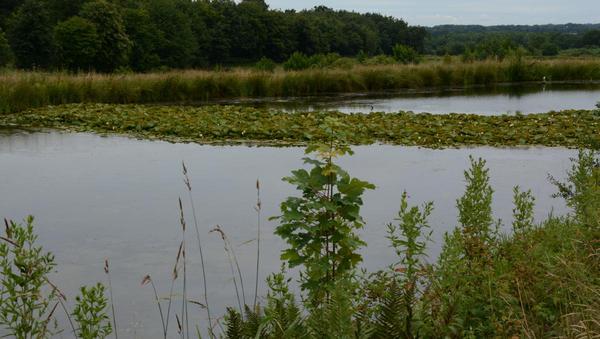 Fischzuchtanlage Hollenborn wird zum Paradies für Amphibien