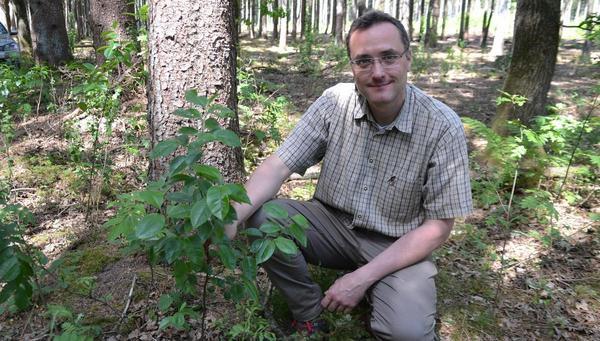 Hausaufgabe Wald