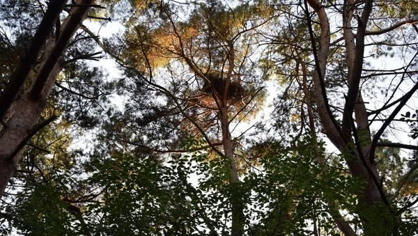 Wald im Umbau