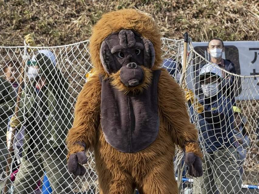 Einmal im Jahr wird im Tama Zoological Park in Tokio ein Ernstfall geübt, der dann doch eher selten vorkommt: Ein Zoowärter im Orang-Utan-Kostüm stellt den Ausbruch eines Menschenaffen nach. Foto: Rodrigo Reyes Marin/ZUMA Wire