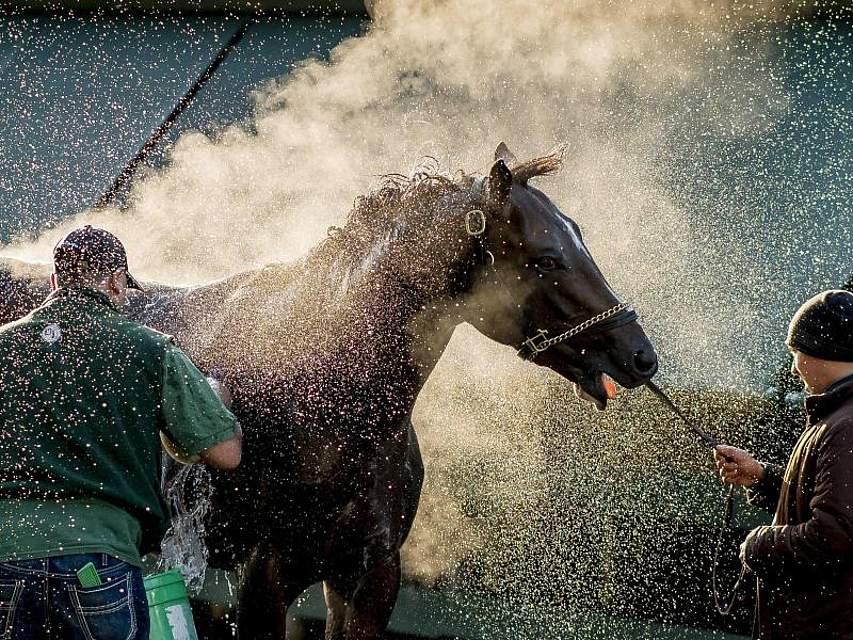 Das Rennpferd Market King wird vor den Preakness Stakes in Baltimore mit Wasser abgespritzt. Das berühmte Pferderennen findet am Samstag zum 144. Mal statt. Foto:Scott Serio, CSM via ZUMA Wire/dpa