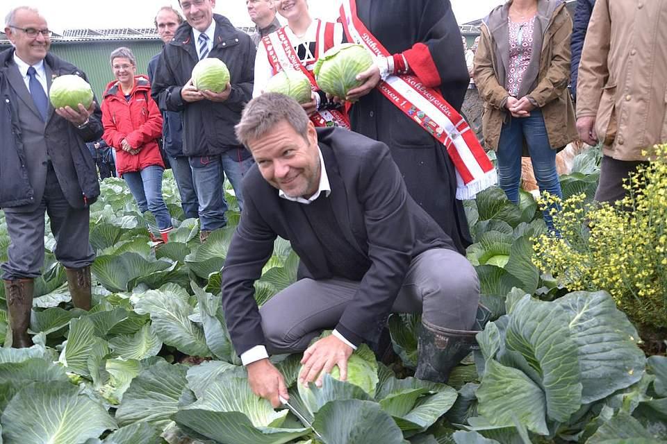Kohlanschnitt in Nordermeldorf: Minister Robert Habeck legt selbst Hand an.