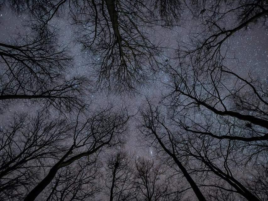 Sterne funkeln am Himmel über den Baumwipfeln eines Buchenwaldes. Foto: Patrick Pleul