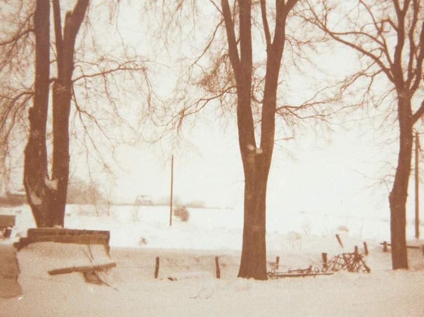 """Das Foto von Heike Liebenau (geb. Koll) aus Epenwöhrden zeigt """"unsere Ulmen auf dem Bauernhof in Wesseln (Koll)"""". In besonderer Erinnerung geblieben ist ihr: """"Berge von Schnee (haushoch). Heißer Tee mit Zitrone. Mit dem Schlitten durch das Dorf. Die Menschen sind näher zusammengerückt. Man hat sich gegenseitig ausgeholfen. Eine Woche schulfrei."""""""
