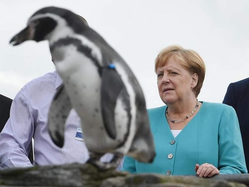 Bundeskanzlerin Angela Merkel ist wieder im Dienst. Bei einem ihrer ersten Auftritte besuchte sie in Mecklenburg-Vorpommern Pinguine auf dem Dach des Ozeaneums. Foto: Stefan Sauer
