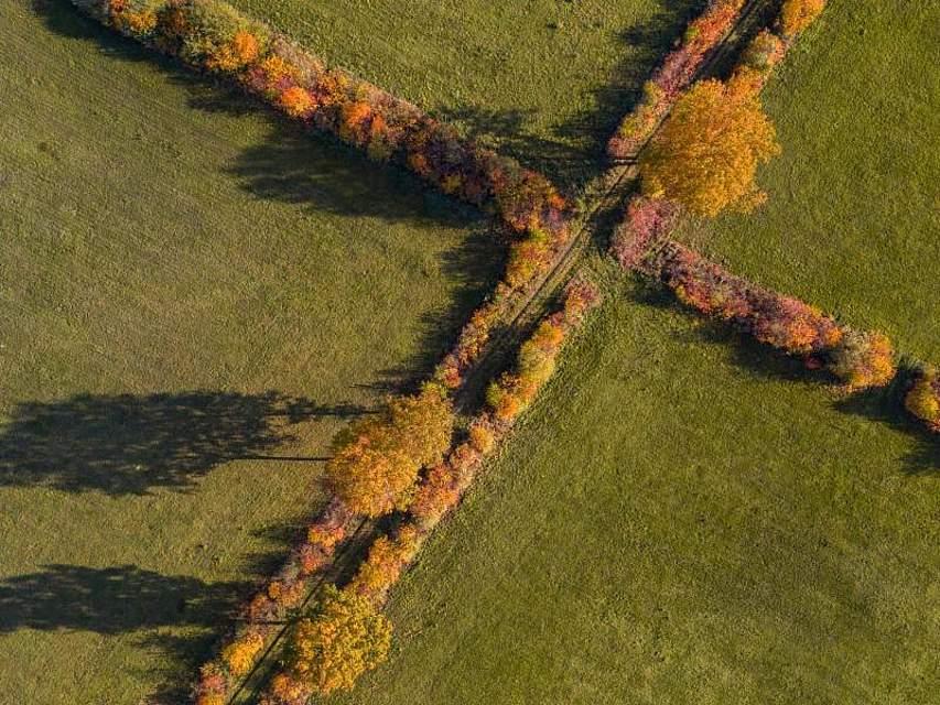 Herbstlich verfärbte Bäume und Büsche auf einem Feld in Haltern am See. Foto: Marcel Kusch/dpa