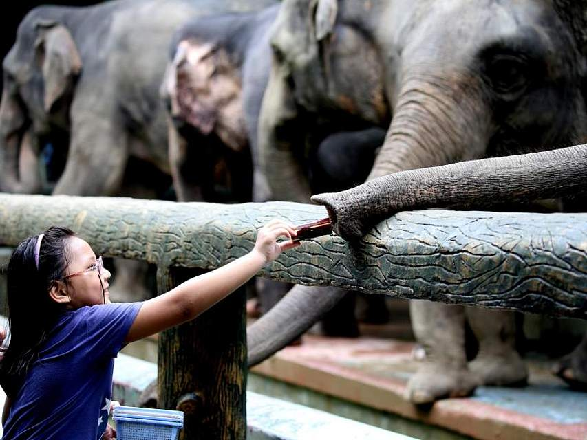 Mit zaghafter Vorsicht füttert ein Mädchen einen Elefanten. Der Welt-Elefantentag findet jedes Jahr am 12. August statt. Foto: U Aung/XinHua
