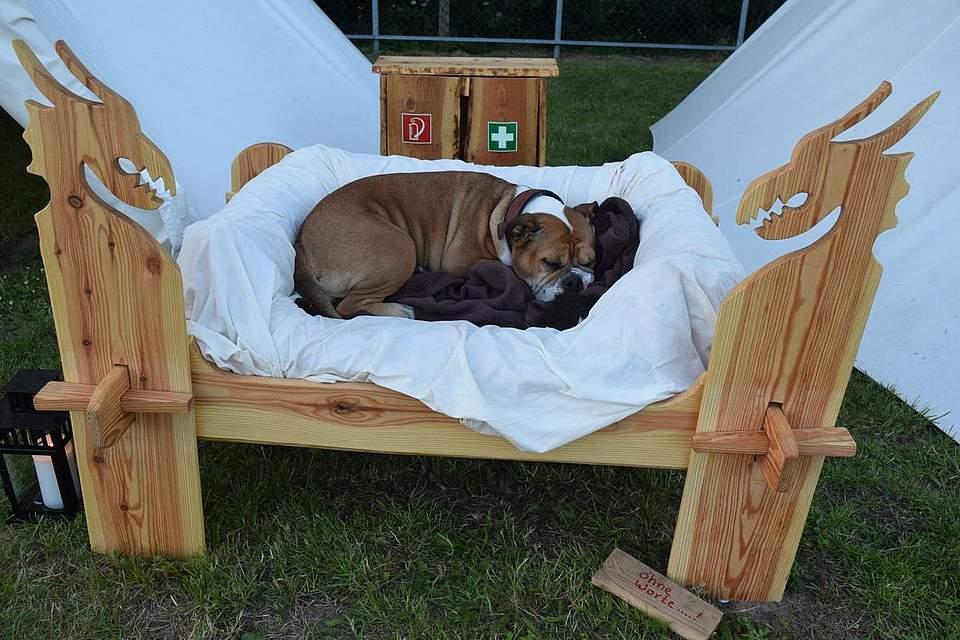 Ein mittelalterliches Hundeleben. Foto: Büsing