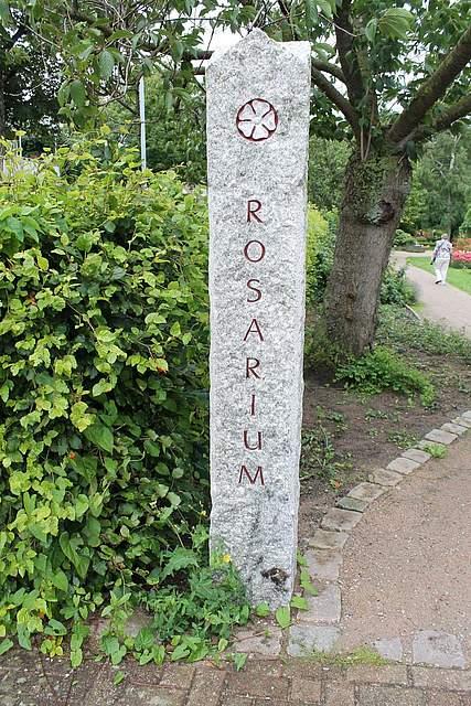 Rosenfahrt nach Uetersen