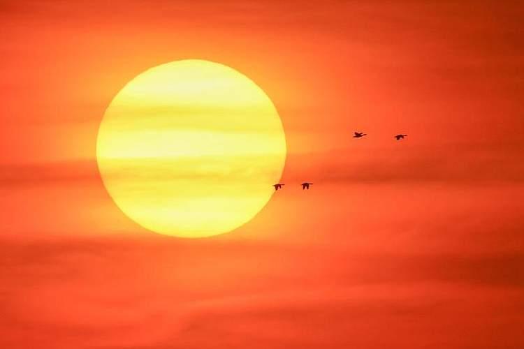 Zugvögel überfliegen ein Feuchtgebiet im Bezirk Zhenlai in China vor der kräftigen Sonne. Foto: Zhang Nan/XinHua/dpa