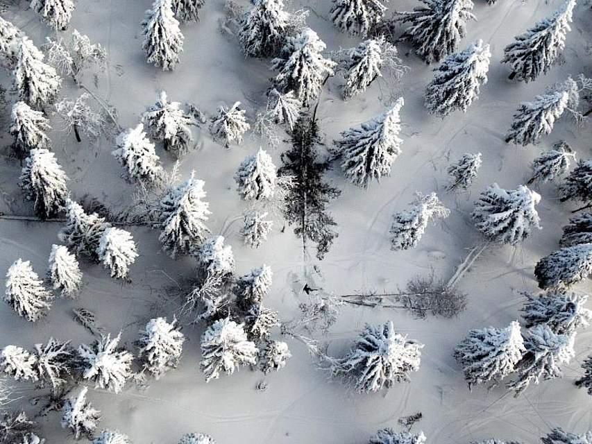 Umgestürzte Bäume liegen im Winterwald an den Hängen des Fichtelbergs. Foto: Jan Woitas