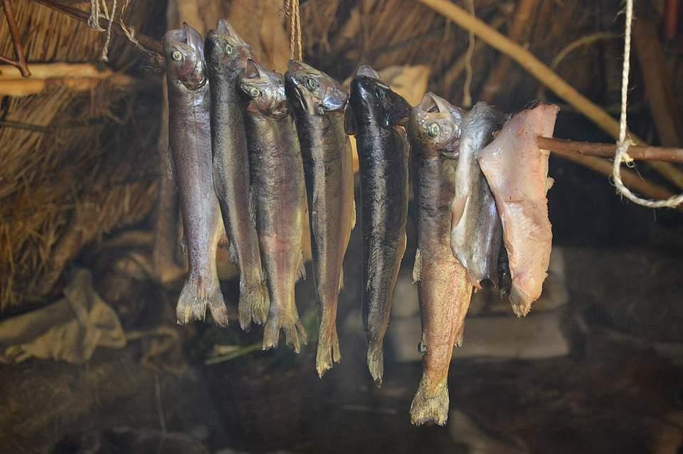 Die von den Steinzeitjägern gefangenenForellen hängen in der Hütte über dem Feuer.