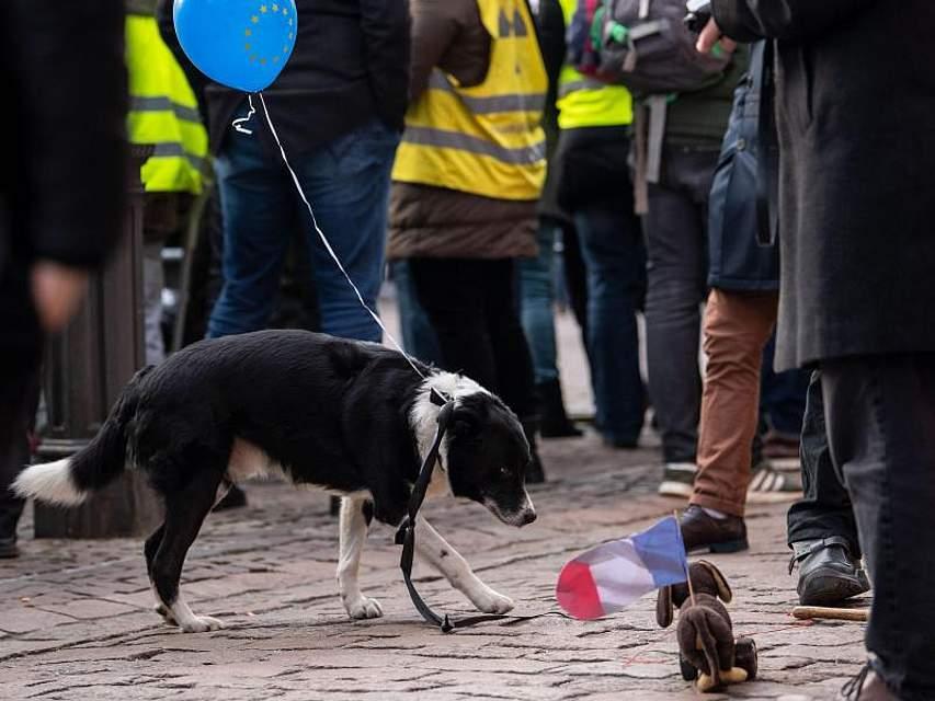 Ein Hund mit einem Europaballon steht neben einem Spielzeughund mit Frankreich-Flagge. Foto: Marius Becker