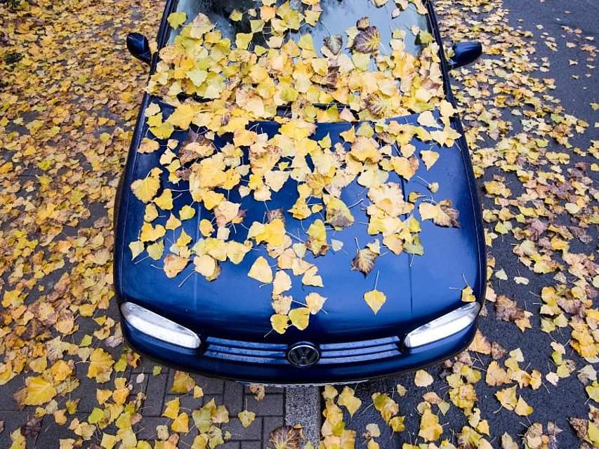 Herbstlich verfärbte Blätter liegen auf einem Volkswagen. Foto: Julian Stratenschulte