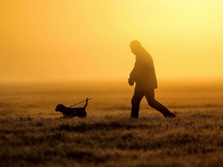 Mit der Ruhe des Morgens:Szene kurz nach Sonnenaufgang und im Frühnebel bei Daugendorf. Foto: Thomas Warnack/dpa