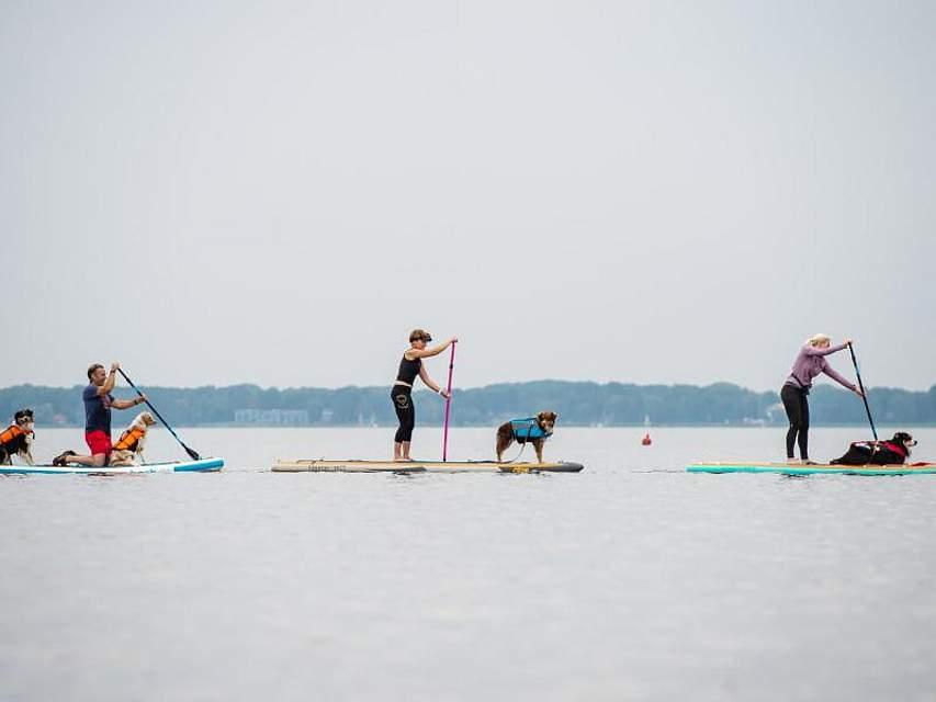 Auf dem Steinhuder Meer in Niedersachsen sind Standup-Paddler mit ihren Hunden unterwegs. Foto: Christophe Gateau